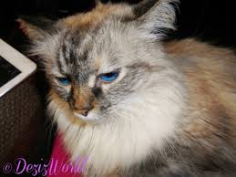 service cats service cats proper methods part 2 deziz world