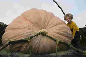 Worlds Heaviest Pumpkin In Kg by Wareham Farmer Mark Baggs Grows Uk U0027s Heaviest Pumpkin