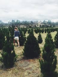 Christmas Tree Shop Bangor Maine by Pick Your Own Christmas Tree Tasmania U2014 Arthur Ben And Barrow
