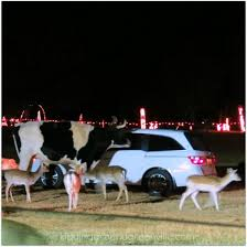 greenville hollywild lights safari benefit