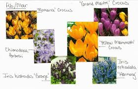 vw garden planning for bulb bloom progression at spokane