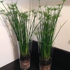 entretien plante grasse d interieur resultado de imagen para plantes fleuries d intérieur composition