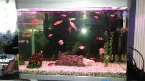 mon petit aquarium d eau chaude de 60l