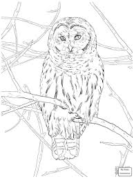 Coloring Pages Owls Birds Flying Barn Owl   Colorpages7.com Barn Owl Tyto Alba 4 Months Old Flying Stock Photo Image Beauty Of Bird Our Barn Owl The Tea Rooms Chat Rspb Community A Flying At Folly Farm In Pembrokeshire West Wales Winter Spirit By Hontor On Deviantart Audubon Field Guide Vector 380339767 Shutterstock Wallpaper 12x800 Hunting A Royalty Free Tattoos Tattoo Ideas Proyectos Que Debo Ientar