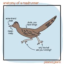 Anatomy Of Different Animals