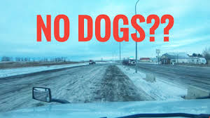 My Trucking Life - NO DOGS ALLOWED!! - #1614