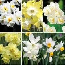 66 best gardening bulbs tubers images on garden