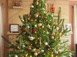 Popular Christmas Tree Species by Where To Buy Christmas Trees In Sydney