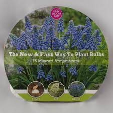 fall planted flower bulbs for sale nature nursery