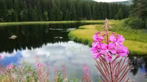fleur et plante du lac photo gratuite lac fleur plantes l eau image gratuite sur