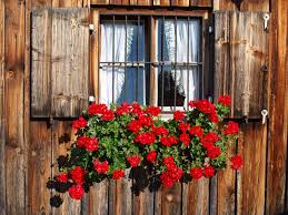 Plant Wood Flower Window Old Rustic Red Cottage Sill Flowers Geranium Shutters Farmhouse Bavaria Floristry