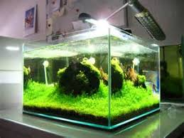 eclairage nano aquarium pas cher nano aquarium wave box vision