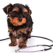 agape animal hospital agape pet hospital veterinarians 2045 wall st hill tn