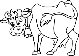 Cow Coloring Pages Photo