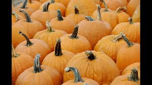Papas Pumpkin Patch Hours by Anne Arundel To Buy Papa John U0027s Farm For Old Mill Complex