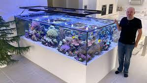 aquaristik aquarium ein stück meer im wohnzimmer