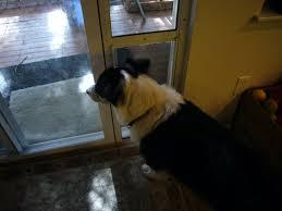Doggie Door Insert For Patio Door by Adventures Of Border Collies In The Burbs