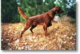 You Probably Paid A Lot Of Money For This Purebred Without Find Pin And More On Hunting Dog
