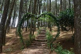 Lokasi Dan Rute Menuju Hutan Pinus Pengger Jogja Serunya Ngadem Dibawah Rerumbunan Pohon