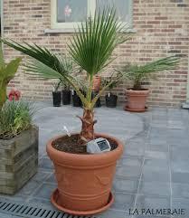 l entretien des palmiers la palmeraie fr