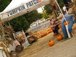 Best Pumpkin Patch Madison Wi by 7 Best Harvest Fair 2012 Images On Pinterest Gallery Gallery