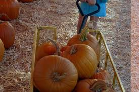 Pumpkin Patch With Petting Zoo Inland Empire by Home