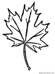 Leaf Maple Leaves Coloring Pages Free Images