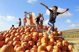 Tanaka Farms Pumpkin Patch by Pumpkin Patch Primed For Picking La Times
