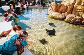 aquarium of the pacific southern california baja gallery