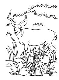 Grassland Coloring Page