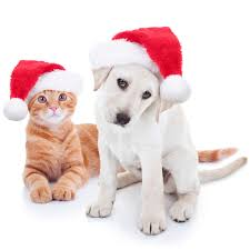 Are Christmas Tree Needles Toxic To Dogs by Advice U0026 Information For Cat U0026 Dog Owners The Good Vet U0026 Pet Guide
