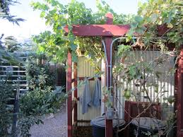 Greywater | Abundant Desert Small Plot Intensive Gardening Tomahawk Permaculture Backyard Vineyard Winery Grapes In Your Own Backyard Lifestyle Bucks County Courier More About The Regent Winegrape Growing Your Grimms Gardens Trellis With In The Yard At Home How To Grow Grapes Steemit Seedless Stark Bros Grape Orchards Pinterest Orchards Seattle Wa Youtube Grown Grape Vine And Trellis Stock Photo Royalty First Years Goal