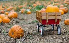 Pumpkin Picking Farms In Maryland by 100 Best Pumpkin Patches And Farms Near Seattle Biringer