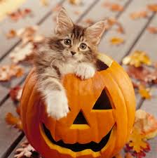 Pumpkin House Kenova Wv Hours by This Is Making My Hair Sticky For More Halloween Cats Visit
