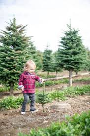 Mountain King Christmas Trees Color Order by Whatcom County U Cut We Cut Trees Ready The Bellingham Herald