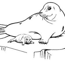 Adult Antarctica Coloring Pages Free