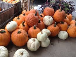 Myers Pumpkin Patch Facebook by Guide To Pumpkin Picking In Alaska I Love Halloween