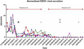Viral Shedding Herpes 2 by Longitudinal Study Of Asian Elephants Elephas Maximus Indicates