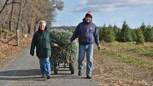 Longest Lasting Christmas Tree by Dry Year Nice For Some Trees Naughty For Others The Morning Call