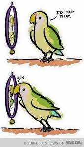 Parrot Caught Singing Bodies Hit The Floor by Thank Parrot Humor Pinterest Parrot Toys And Bird