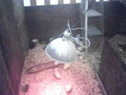 Reptile Heat Lamps Safety by Safety With Heat Lamps Youtube