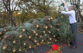 Fresh Christmas Trees May Be Harder To Find This Year