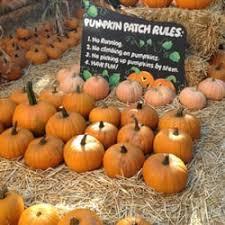 Alameda Pumpkin Patch 2015 by Piedmont Avenue Pumpkin Patch 16 Photos U0026 18 Reviews Pumpkin
