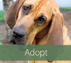 Non Shedding Small Dogs For Adoption by 100 Small Non Shedding Dogs For Adoption Heading Home K9