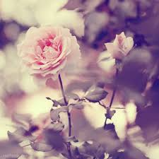 RZ Pink Vintage Flower Girly Photography Beautiful Girl Flowers Girls Rose Roses Photo Beauty Style Photos