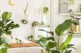 bergamotte pflanzen pflanzen zimmerpflanzen zimmer