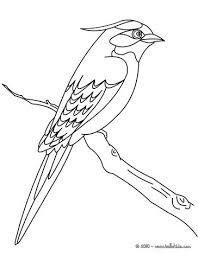 Bird Sitting On A Branch Online