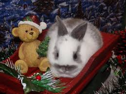 Bunnies For Sale Jetty A34165769 Homes For Pets Chachi A35249411 Barn Petsbarnstore Twitter Kitten Marley A36143713 Petbarn Australia Youtube Little Red San Antonio Menu Prices Restaurant Reviews Custom Made Barn Door Rolling Baby Gates House Stuff Otto A385218
