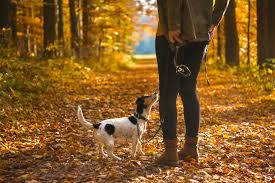 Are Christmas Trees Poisonous To Dogs Uk by The Dangers Of Conkers For Dogs Pet Care Advice Vets Now