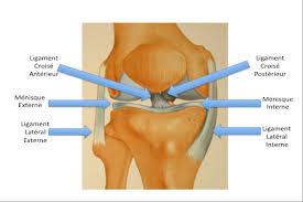 douleur interieur genou course a pied dr cyril mayer ligament croisé antérieur